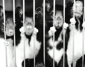 rodents-in-jail