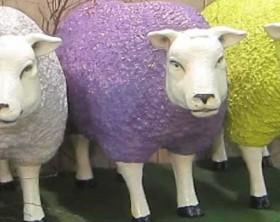 sheepLR