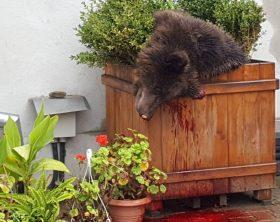 urs-impuscat