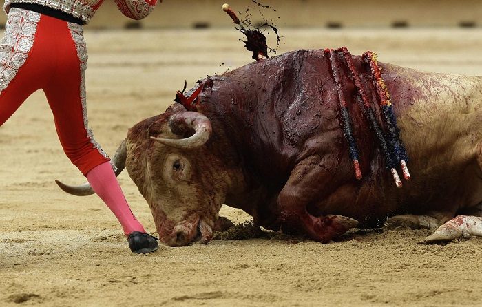 A bullfighter's assistant kills a bull during the first bullfight of the San Fermin festival in Pamplona July 7, 2012. REUTERS/Joseba Etxaburu (SPAIN - Tags: ANIMALS SOCIETY) ORG XMIT: EAG206