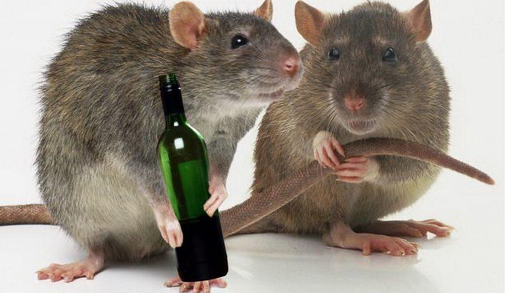 PROD-MAIN-RAT-EXCUSES